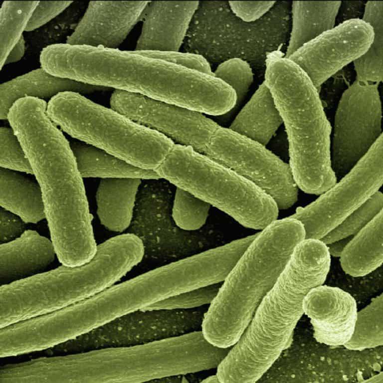 E. coli - Fäkaltransfer
